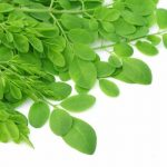 herb-moringa-leaves