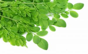 herb-moringa-leaves
