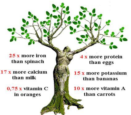 moringa-oleifera-benefits