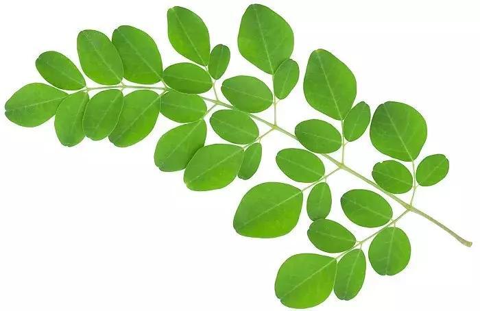 Weight loss benefits of Moringa you should know! - Ankh Rah