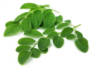 Moringa leaves for skin